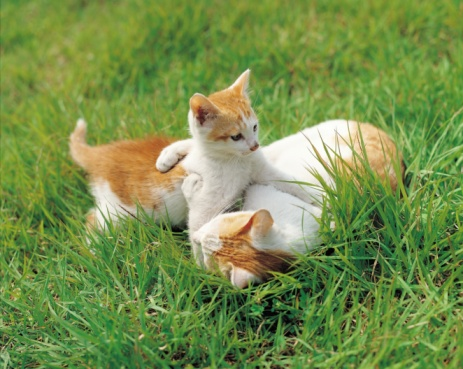子猫「92814395」:スマホ壁紙(3)