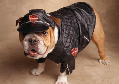 Leather Jacket「ENGLISH BULLDOG FOR BAD TO THE BONE」:スマホ壁紙(8)