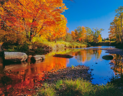 Sugar maple「NEW ENGLAND AUTUMN COUNTRYSIDE WITH REFLECTIONS IN THE WELLS RIVER VERMONT」:スマホ壁紙(2)