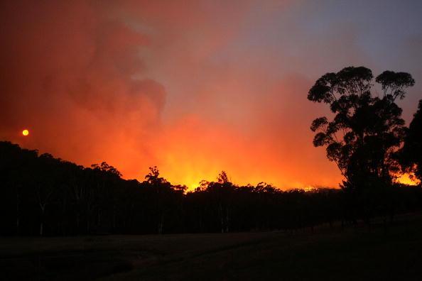 オーストラリア「Death Toll Passes 100 As Bushfires Sweep Through Victoria」:写真・画像(5)[壁紙.com]