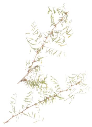 Specimen Holder「23604879」:スマホ壁紙(6)