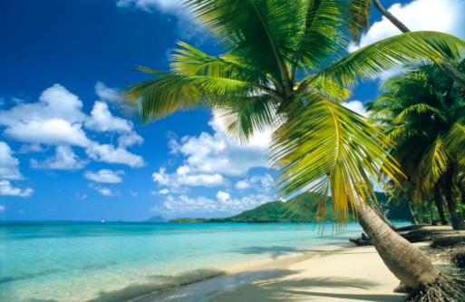 Fan Palm Tree「SAINTE ANNE BEACH, MARTINIQUE, CARIBBEAN」:スマホ壁紙(19)