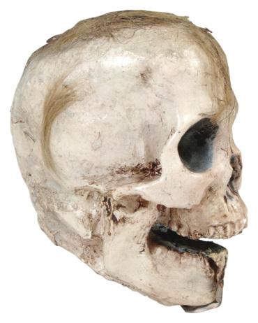 Human Nose「23665832」:スマホ壁紙(16)