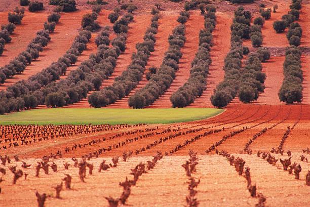 SPAIN, LA MANCHA, OLIVE TREES, VINEYARD:スマホ壁紙(壁紙.com)