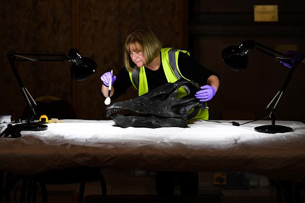 ヒューマンインタレスト「Dippy The Diplodocus Arrives At The Glasgow Art Galleries」:写真・画像(0)[壁紙.com]