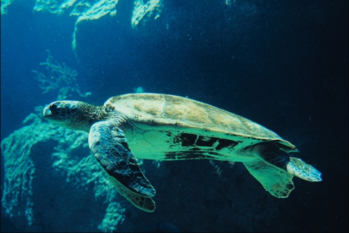 Green Turtle「23899664」:スマホ壁紙(18)