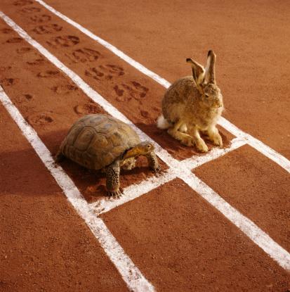 Rabbit「TORTOISE AND HARE ON TRACK」:スマホ壁紙(14)