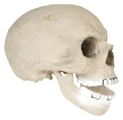 Human Nose「23665825」:スマホ壁紙(15)