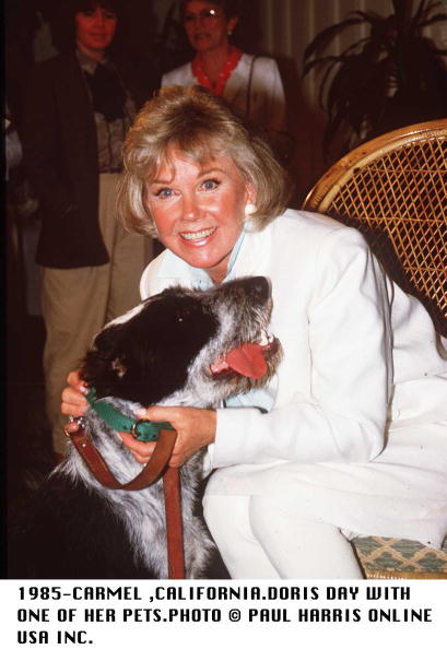 animal「Doris Day with Her Dog, 1985」:写真・画像(5)[壁紙.com]