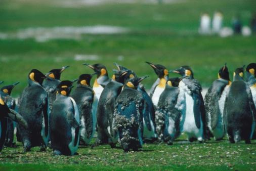 Falkland Islands「23898954」:スマホ壁紙(12)