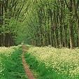 コンピエーニュの森壁紙の画像(壁紙.com)