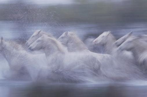 Horse「WILD HORSES (EQUUS CABALLUS) FRANCE」:スマホ壁紙(10)