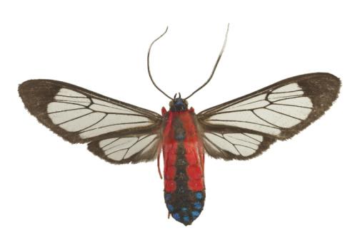 昆虫「23599219」:スマホ壁紙(5)