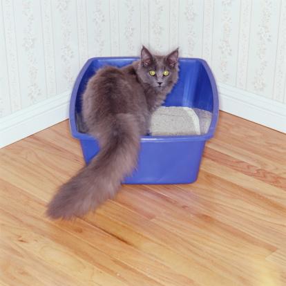 Litter Box「GRAY CAT IN KITTY LITTER BOX」:スマホ壁紙(9)