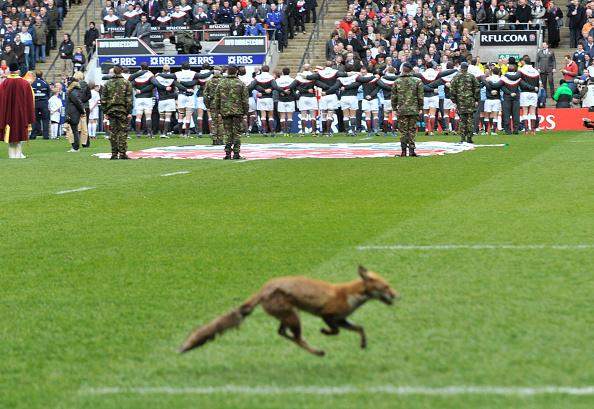 Patriotism「Six Nations Rugby Union England v Scotland at Twickenham 2011」:写真・画像(4)[壁紙.com]