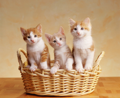 Kitten「THREE KITTENS IN BASKET」:スマホ壁紙(6)