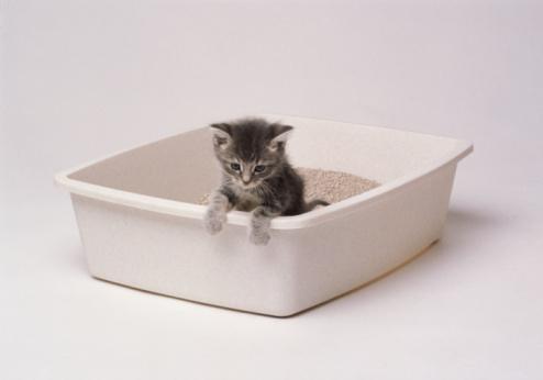 Litter Box「KITTEN IN LITTER BOX」:スマホ壁紙(4)