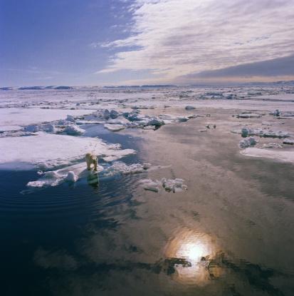 北極「SVALBARD, POLAR BEAR STANDING ON ICE FLOE」:スマホ壁紙(3)