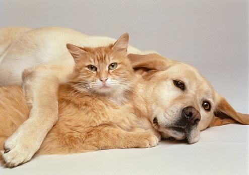 Cat「CAT AND DOG TOGETHER」:スマホ壁紙(18)