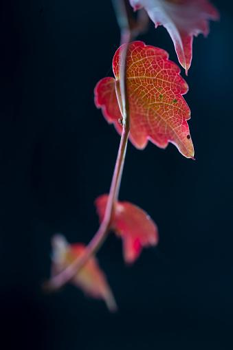 葉・植物「JUAN CARLOS MUÑOZ ROBREDO」:スマホ壁紙(13)