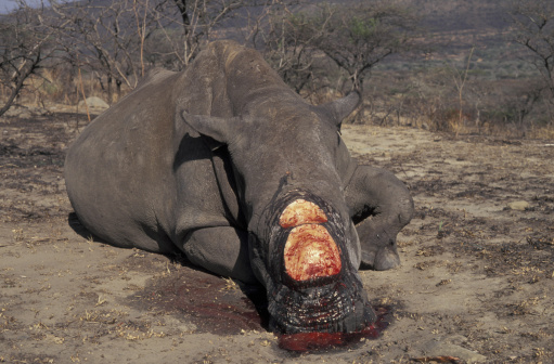 バイパス「POACHED RHINOCEROS. SOUTH AFRICA. BLOOD」:スマホ壁紙(9)