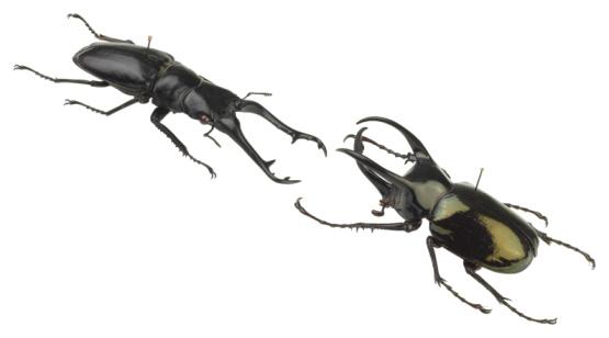 Beetle「23599028」:スマホ壁紙(13)