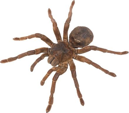 クモ学のスマホ壁紙 検索結果 [1...