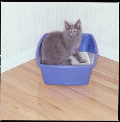 Litter Box「GRAY CAT IN KITTY LITTER BOX」:スマホ壁紙(10)