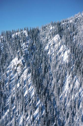 Boreal Forest「23935913」:スマホ壁紙(7)