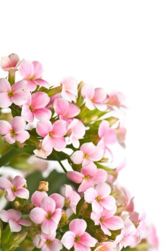 桜 イラストのスマホ壁紙 検索結果 1 画像数4枚 壁紙 Com