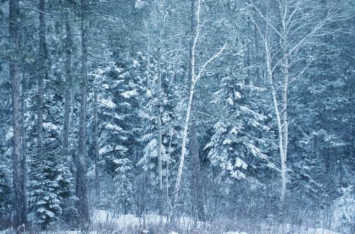 Boreal Forest「23936654」:スマホ壁紙(12)