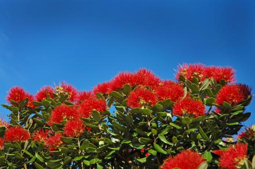 New Zealand「POHUTUKAWA FLOWERS LANDSCAPE」:スマホ壁紙(4)