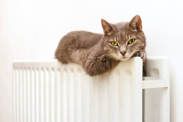 SLEEPY CAT ON COSY RADIATOR:スマホ壁紙(壁紙.com)