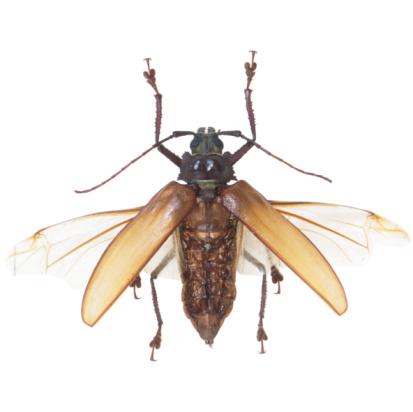 虫・昆虫「23630086」:スマホ壁紙(7)