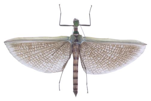 昆虫「23640316」:スマホ壁紙(11)