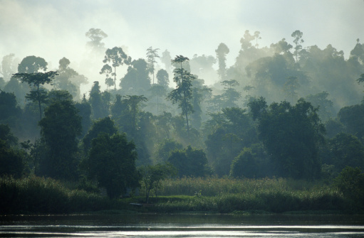Tropical Rainforest「RAINFOREST AND RIVER, BORNEO, MALAYSIA」:スマホ壁紙(12)