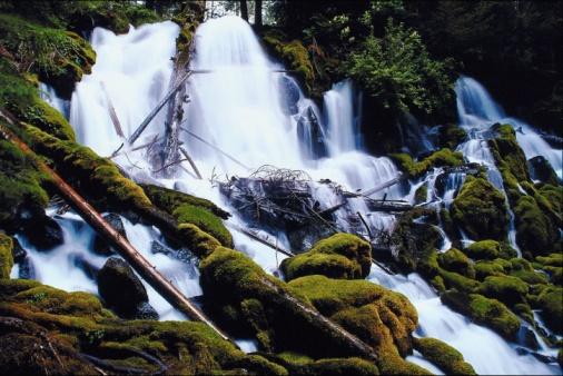Umpqua National Forest「23896983」:スマホ壁紙(14)