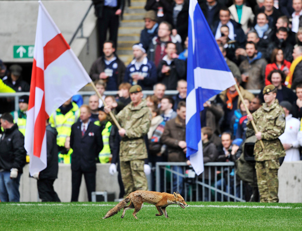 Patriotism「Six Nations Rugby Union England v Scotland at Twickenham 2011」:写真・画像(5)[壁紙.com]