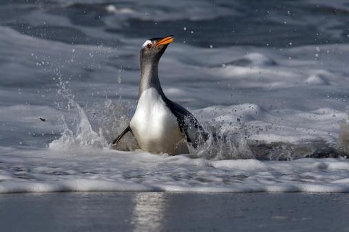 Falkland Islands「-」:スマホ壁紙(17)
