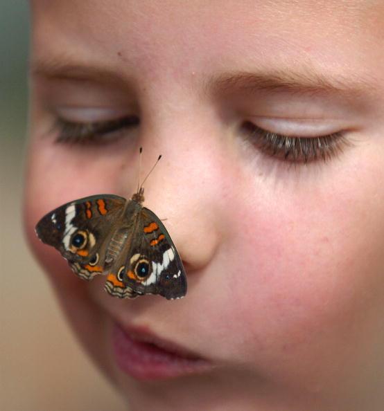 "One Animal「New Butterfly Exhibit ""Wings Around The World"" Opens In Cincinnati」:写真・画像(5)[壁紙.com]"