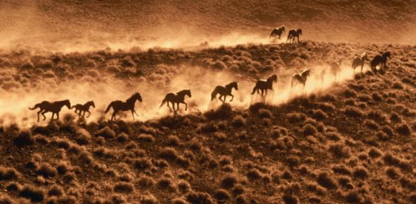Horse「WILD HORSES IN AMERICA」:スマホ壁紙(7)