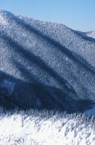 Boreal Forest「23935911」:スマホ壁紙(14)