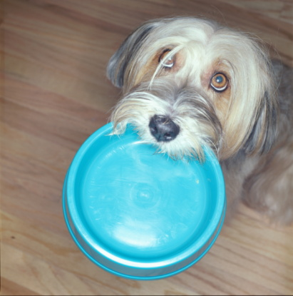 Pet Food Dish「TIBETIAN TERRIER WITH FOOD BOWL IN MOUTH」:スマホ壁紙(9)