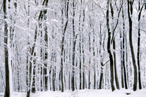 Snowdrift「-」:スマホ壁紙(0)