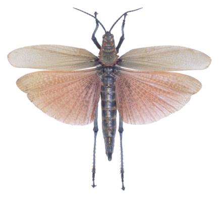昆虫「23640292」:スマホ壁紙(12)