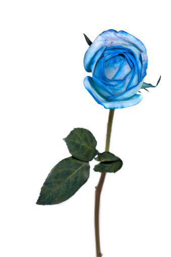 Apple Blossom「rose, spring time flower beauty in nature」:スマホ壁紙(16)
