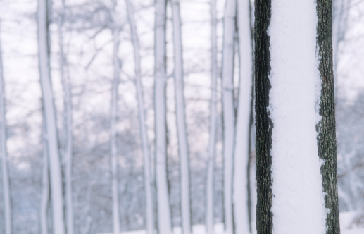 Snowdrift「-」:スマホ壁紙(1)