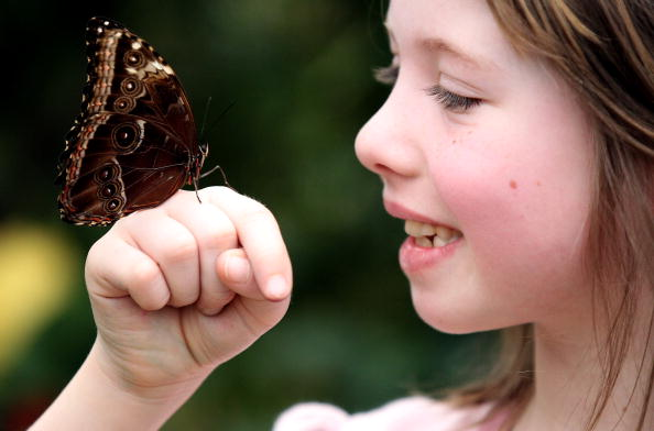 Human Hand「Natural History Museum Launch Their New Butterfly Explorer Exhibition」:写真・画像(12)[壁紙.com]