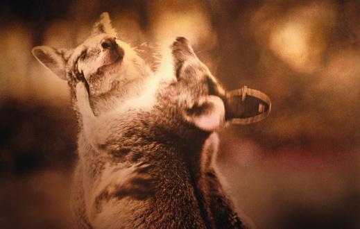 カンガルー「ANIMALS (KANGAROOS)」:スマホ壁紙(5)