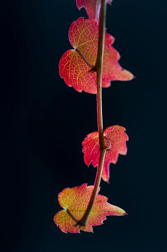 葉・植物「JUAN CARLOS MUÑOZ ROBREDO」:スマホ壁紙(11)